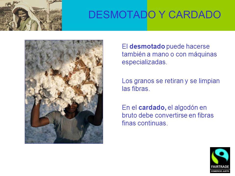 DESMOTADO Y CARDADO