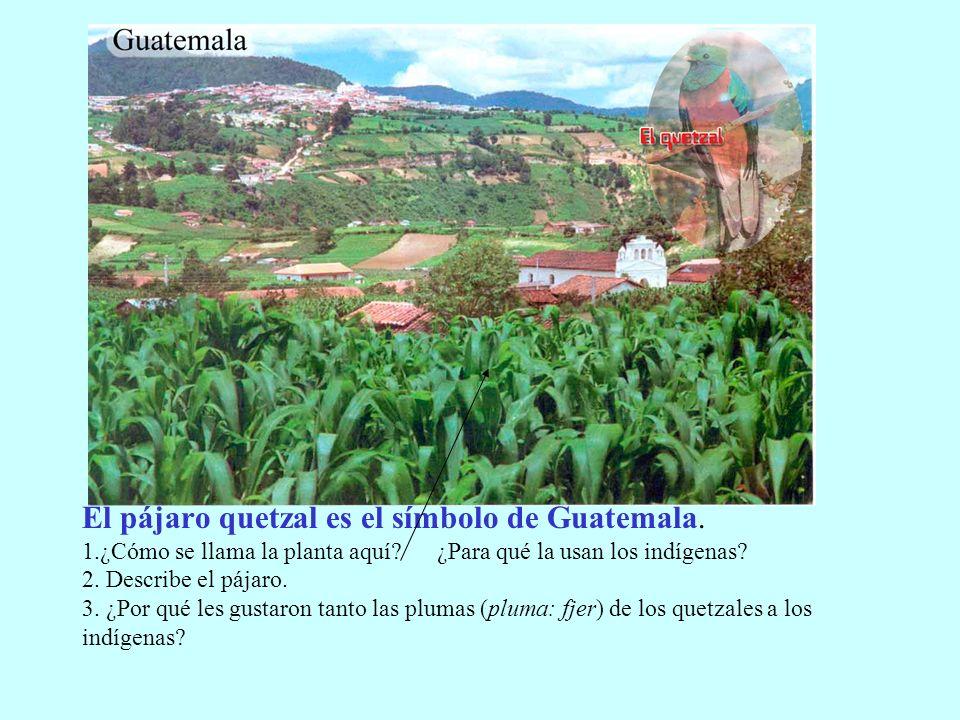 El pájaro quetzal es el símbolo de Guatemala. 1
