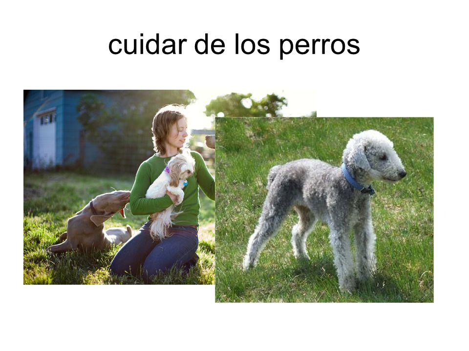 cuidar de los perros