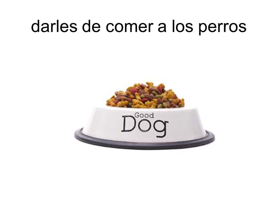 darles de comer a los perros