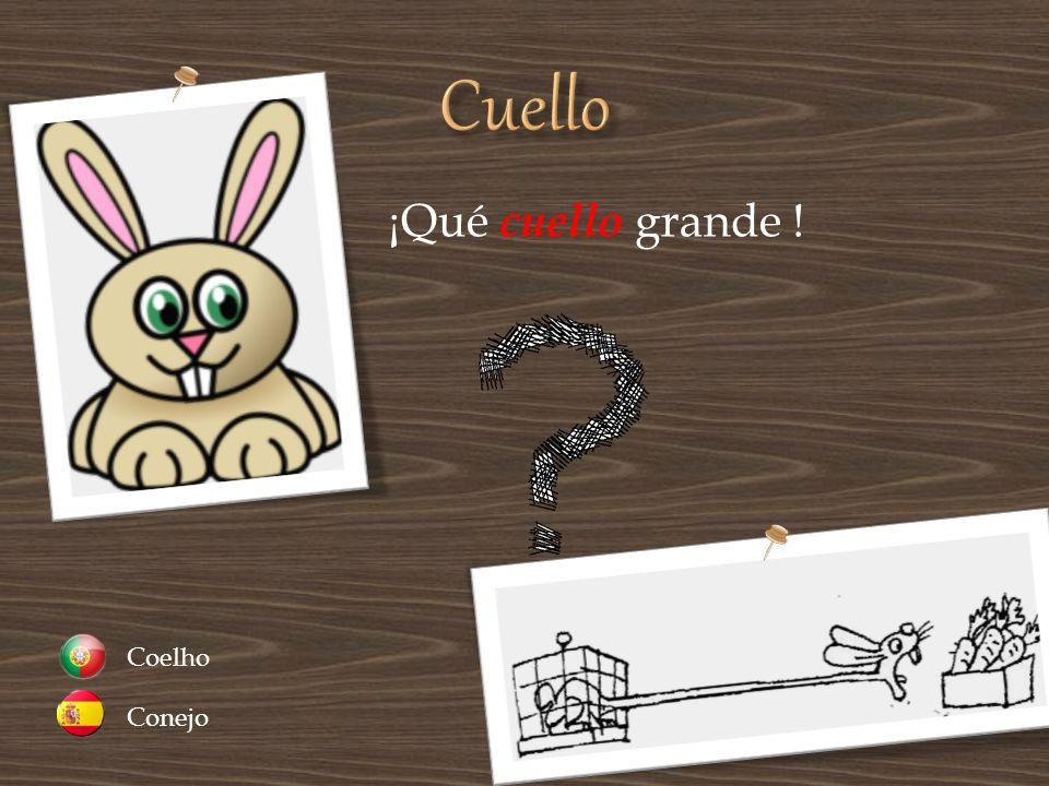 Cuello ¡Qué cuello grande ! Conejo Coelho