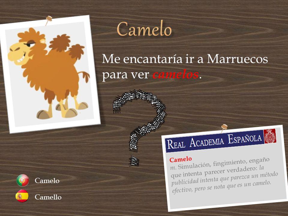 Camelo Me encantaría ir a Marruecos para ver camelos. Camelo Camello