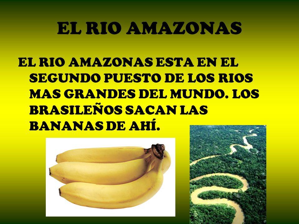 EL RIO AMAZONAS EL RIO AMAZONAS ESTA EN EL SEGUNDO PUESTO DE LOS RIOS MAS GRANDES DEL MUNDO.