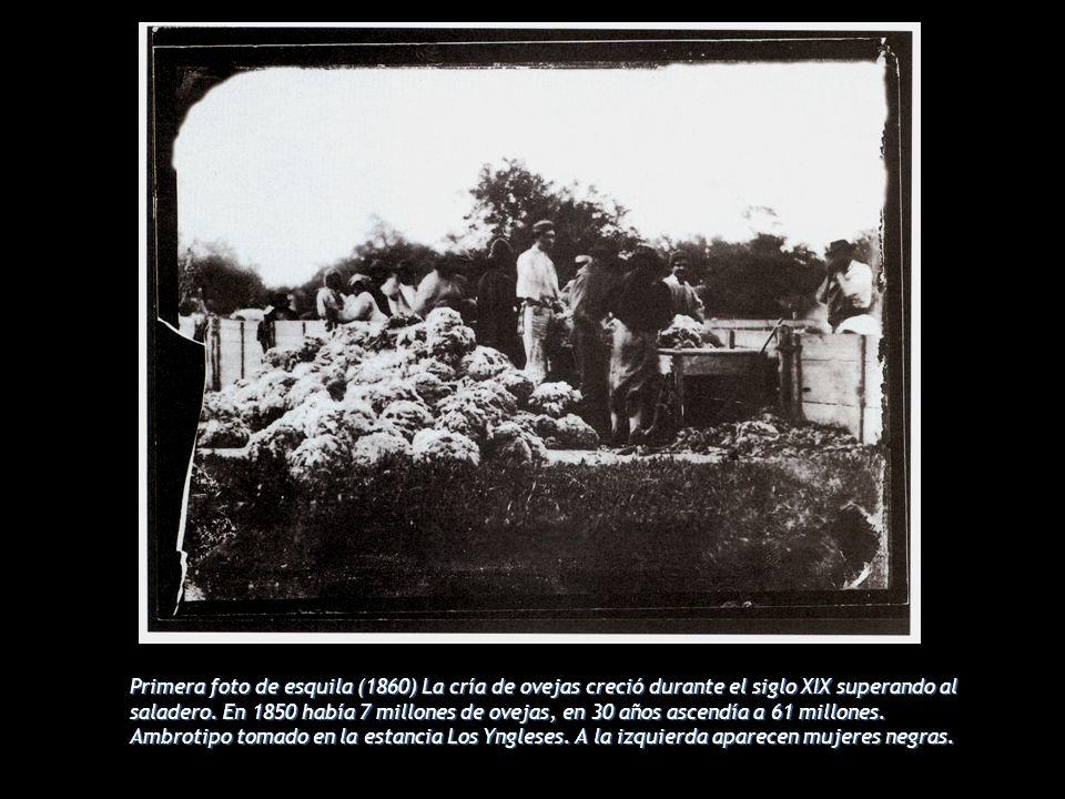 Primera foto de esquila (1860) La cría de ovejas creció durante el siglo XIX superando al saladero.