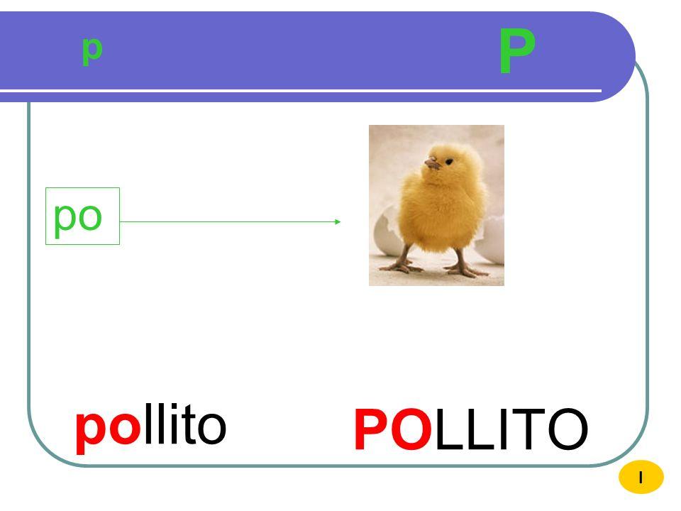 P p po pollito POLLITO I