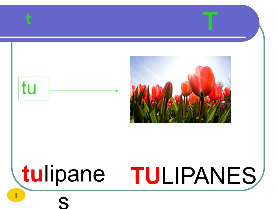 T t tu tulipanes TULIPANES I