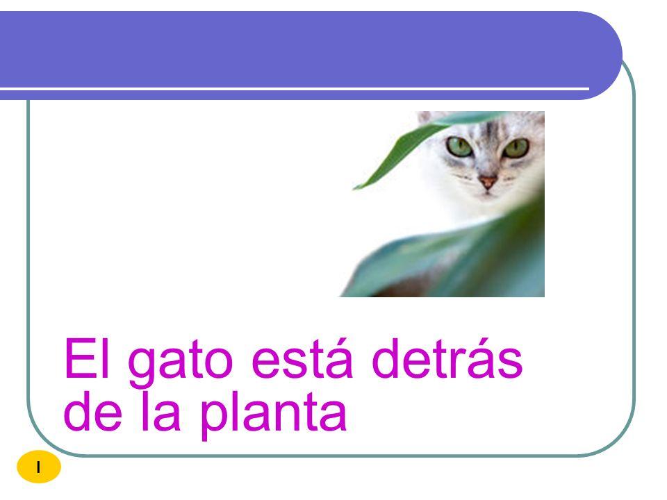 El gato está detrás de la planta