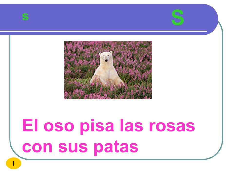 S s El oso pisa las rosas con sus patas I