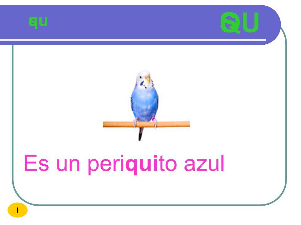 QU S qu s Es un periquito azul I