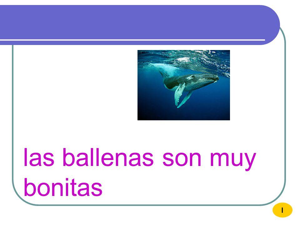 las ballenas son muy bonitas