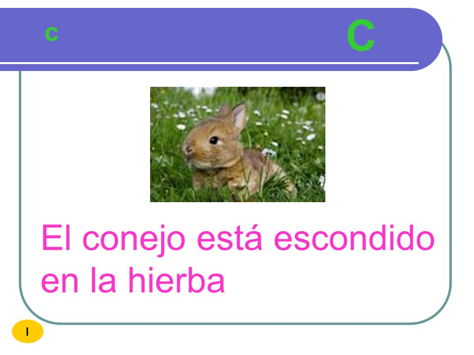 C c El conejo está escondido en la hierba I