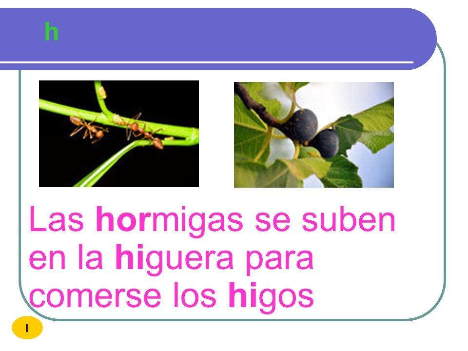 Las hormigas se suben en la higuera para comerse los higos