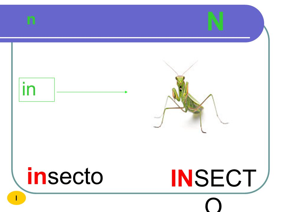 N n in insecto INSECTO I