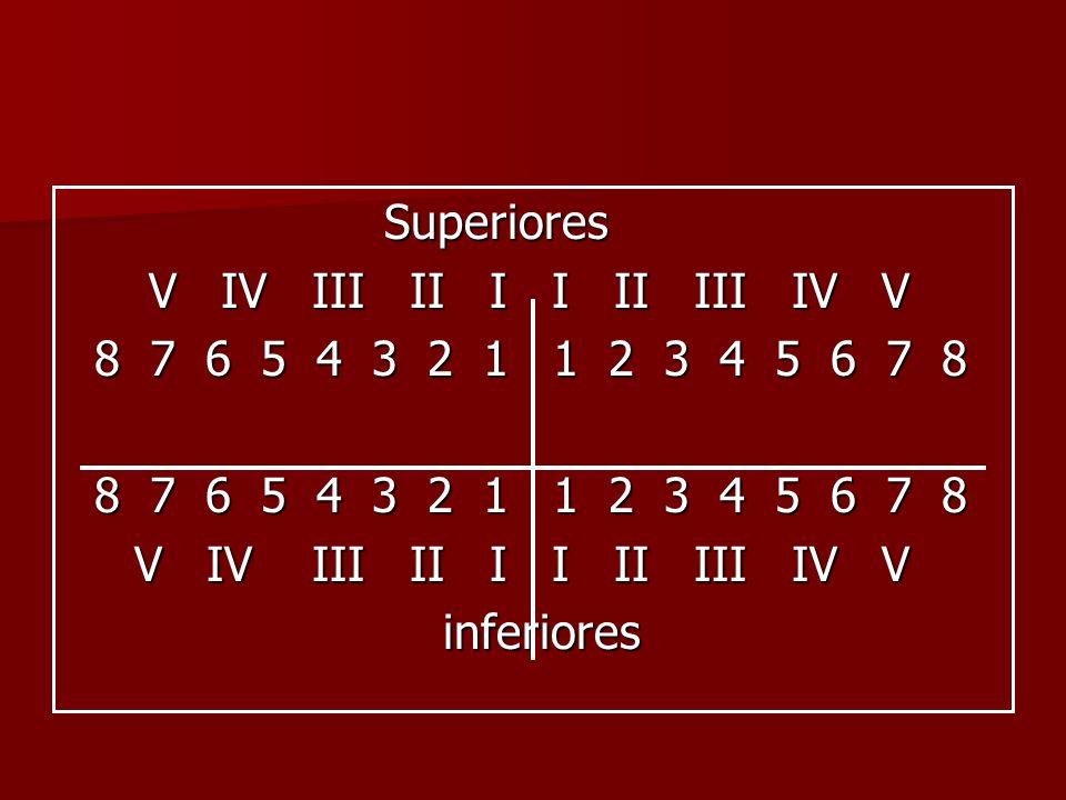 Superiores V IV III II I I II III IV V. 8 7 6 5 4 3 2 1 1 2 3 4 5 6 7 8.