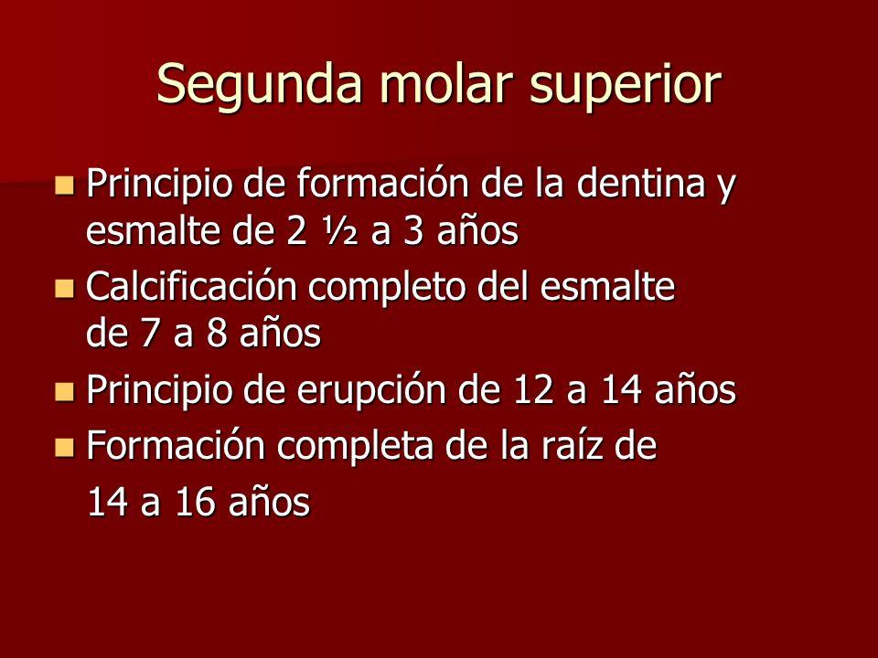 Segunda molar superior