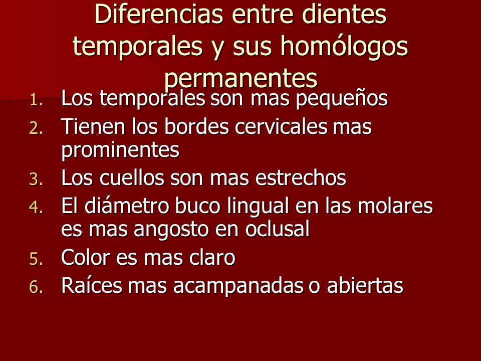 Diferencias entre dientes temporales y sus homólogos permanentes