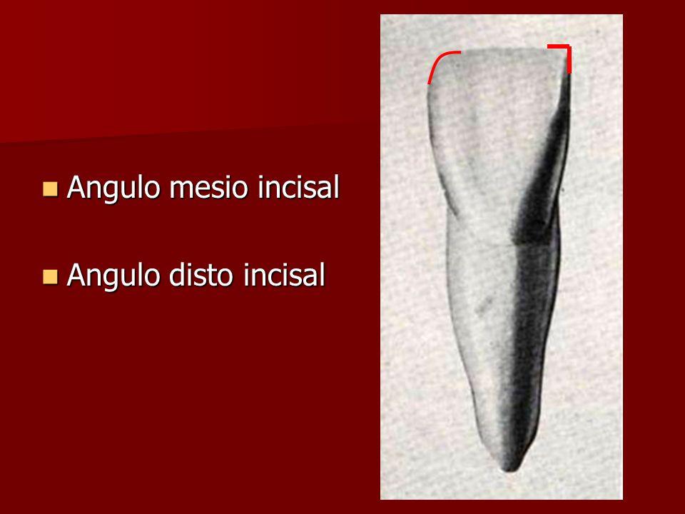 Angulo mesio incisal Angulo disto incisal