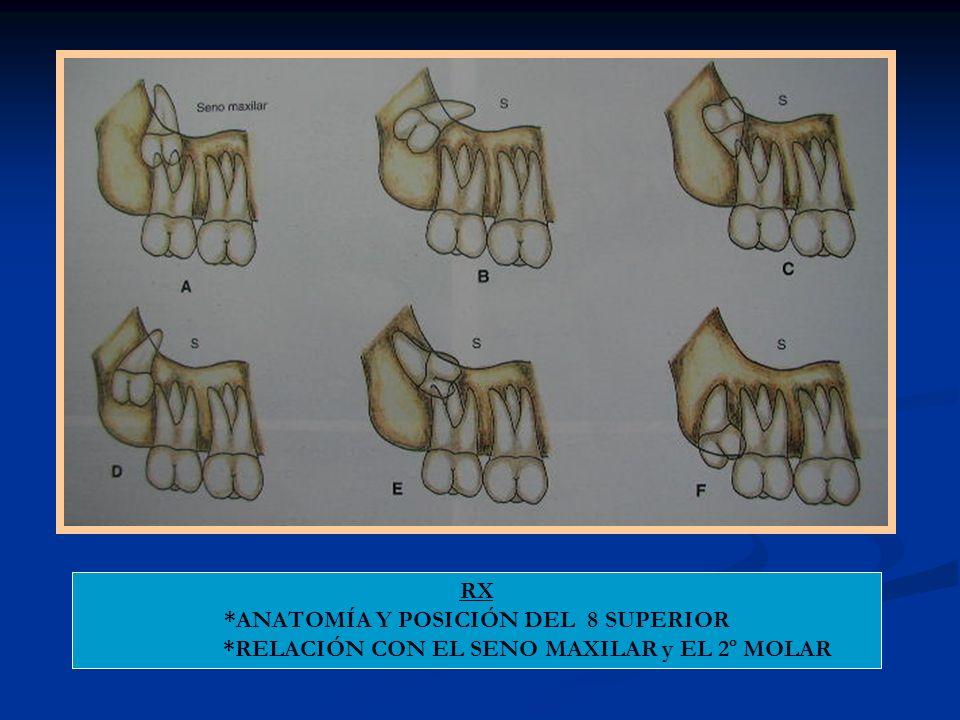 *ANATOMÍA Y POSICIÓN DEL 8 SUPERIOR