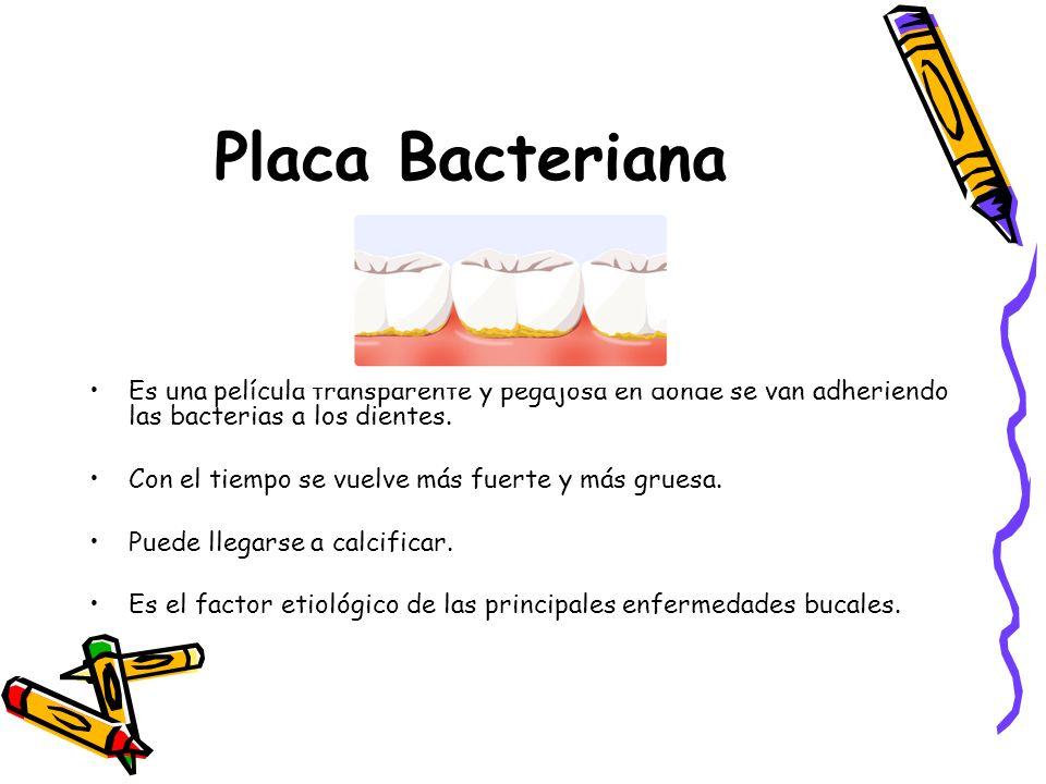 Placa Bacteriana Es una película transparente y pegajosa en donde se van adheriendo las bacterias a los dientes.