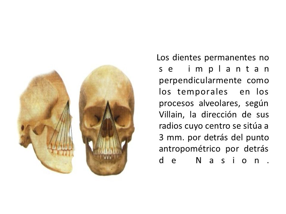 Los dientes permanentes no se implantan perpendicularmente como los temporales en los procesos alveolares, según Villain, la dirección de sus radios cuyo centro se sitúa a 3 mm.