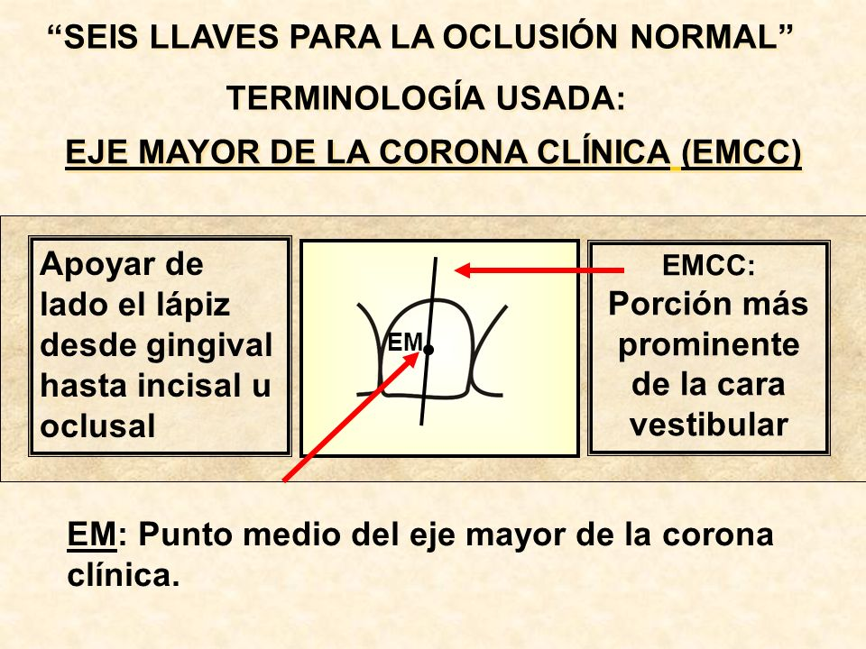 TERMINOLOGÍA USADA: EJE MAYOR DE LA CORONA CLÍNICA (EMCC)