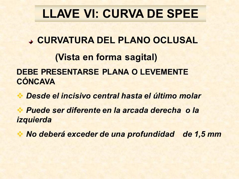 LLAVE VI: CURVA DE SPEE (Vista en forma sagital)