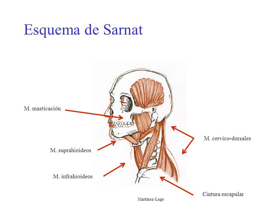 Esquema de Sarnat Esquema de Sarnat M. masticación M. cervico-dorsales