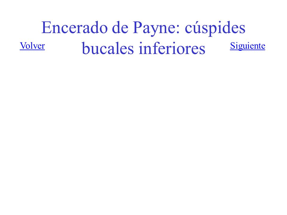 Encerado de Payne: cúspides bucales inferiores