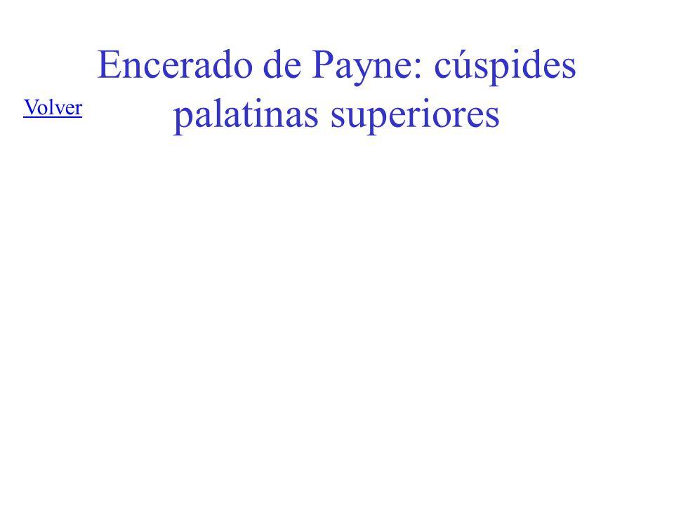 Encerado de Payne: cúspides palatinas superiores
