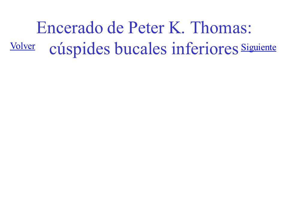 Encerado de Peter K. Thomas: cúspides bucales inferiores