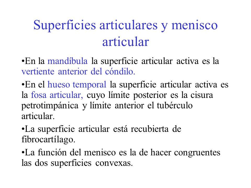 Superficies articulares y menisco articular