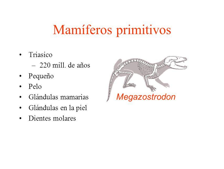 Mamíferos primitivos Megazostrodon Triasico 220 mill. de años Pequeño