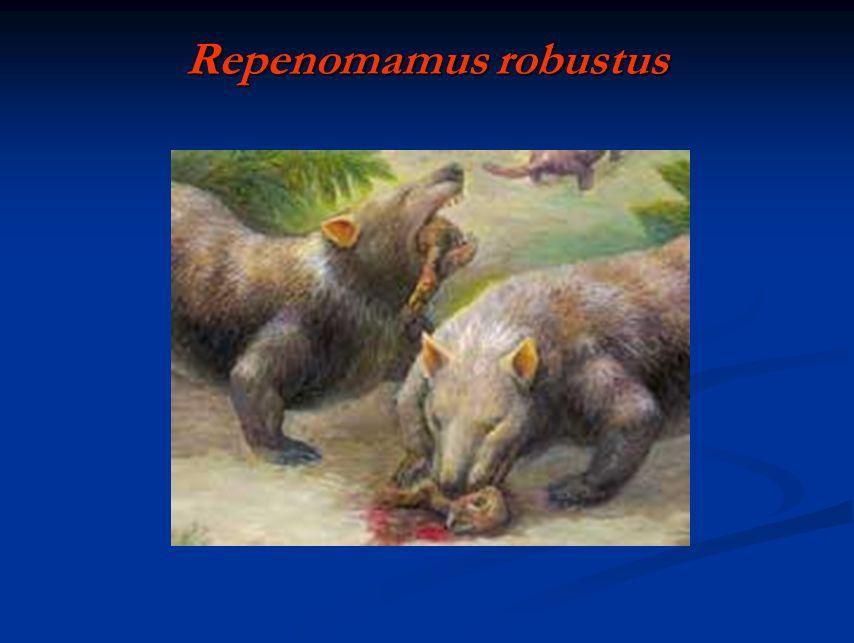 Repenomamus robustus