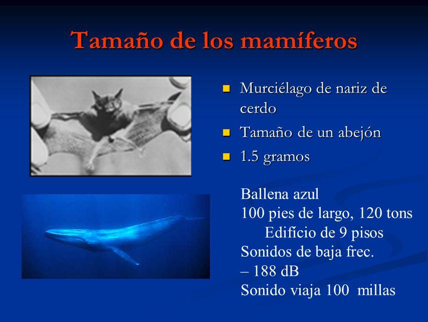 Tamaño de los mamíferos