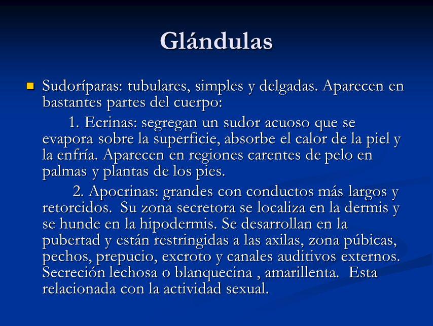 Glándulas Sudoríparas: tubulares, simples y delgadas. Aparecen en bastantes partes del cuerpo: