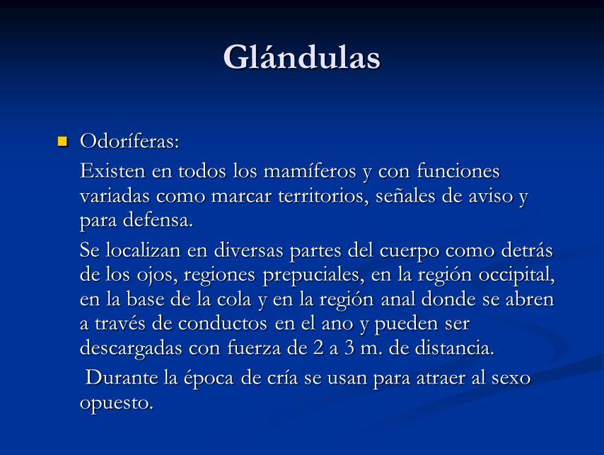 Glándulas Odoríferas: