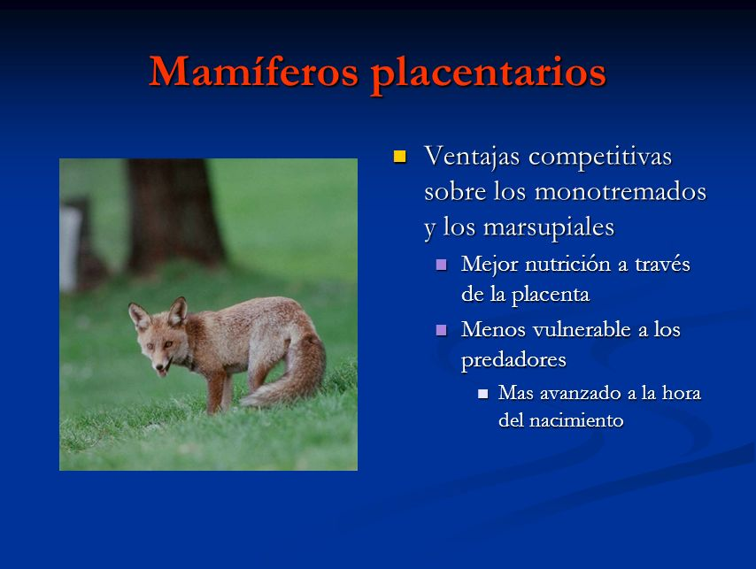 Mamíferos placentarios
