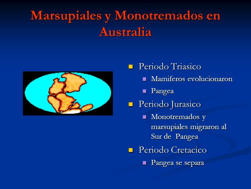 Marsupiales y Monotremados en Australia