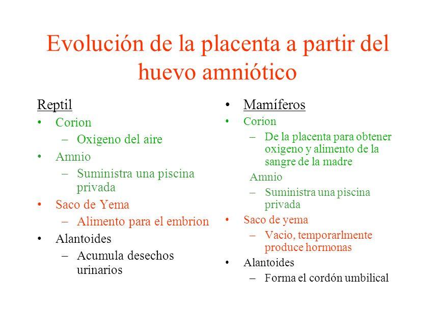 Evolución de la placenta a partir del huevo amniótico