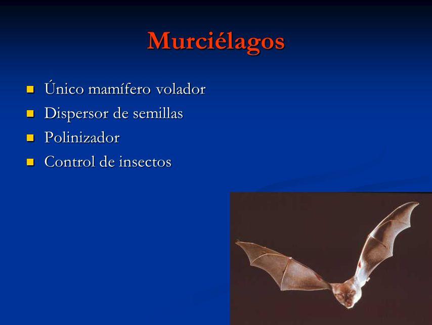 Murciélagos Único mamífero volador Dispersor de semillas Polinizador