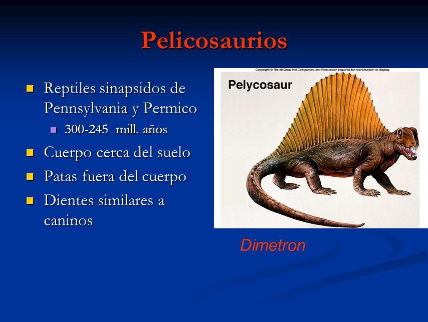 Pelicosaurios Reptiles sinapsidos de Pennsylvania y Permico