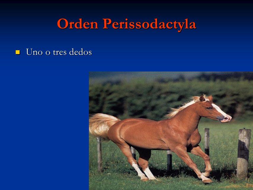 Orden Perissodactyla Uno o tres dedos