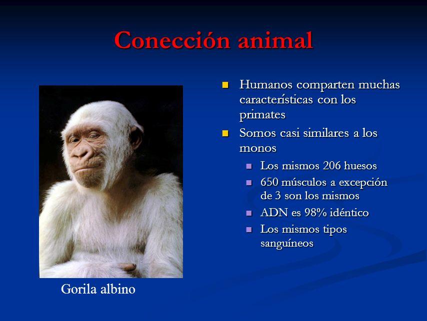 Conección animal Humanos comparten muchas características con los primates. Somos casi similares a los monos.