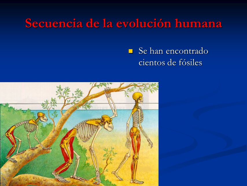 Secuencia de la evolución humana