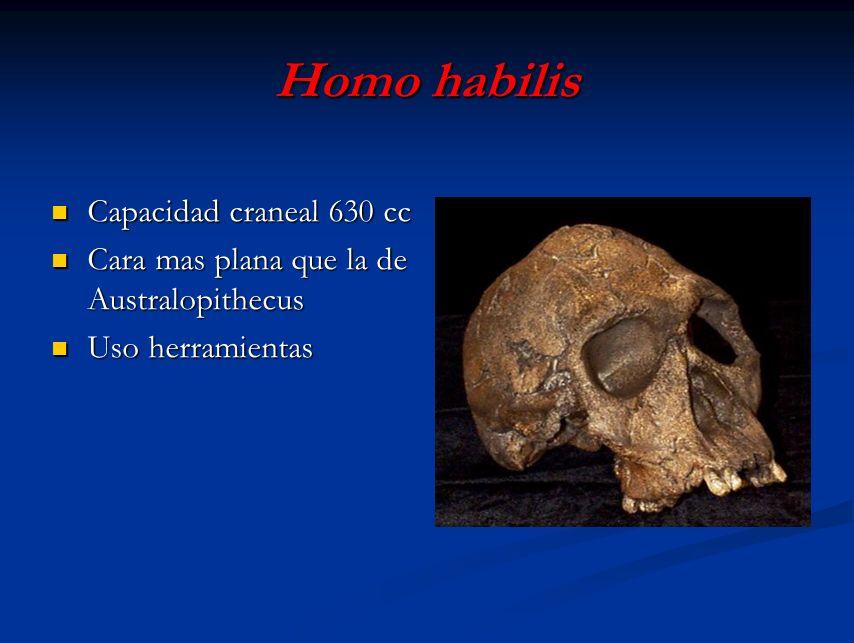 Homo habilis Capacidad craneal 630 cc
