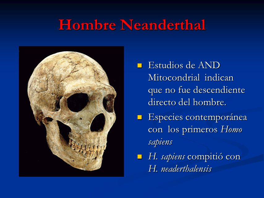 Hombre Neanderthal Estudios de AND Mitocondrial indican que no fue descendiente directo del hombre.