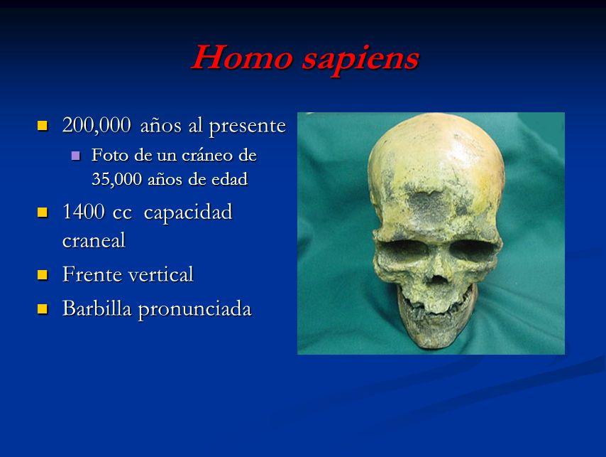 Homo sapiens 200,000 años al presente 1400 cc capacidad craneal