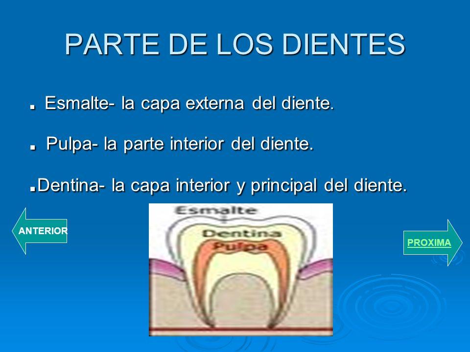 . Pulpa- la parte interior del diente.