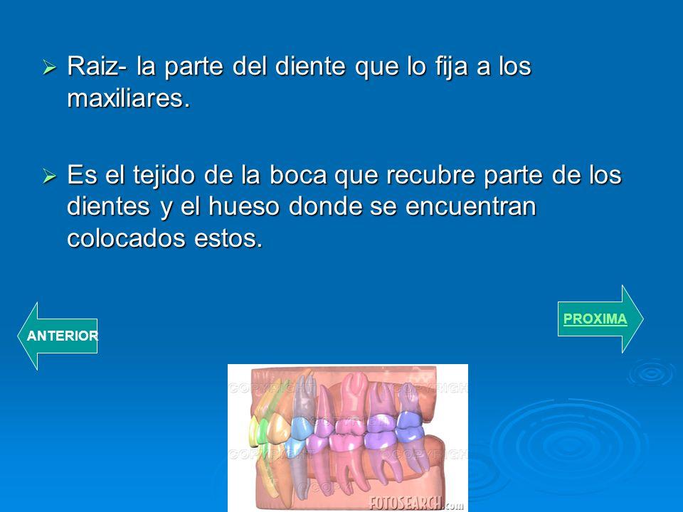 Raiz- la parte del diente que lo fija a los maxiliares.