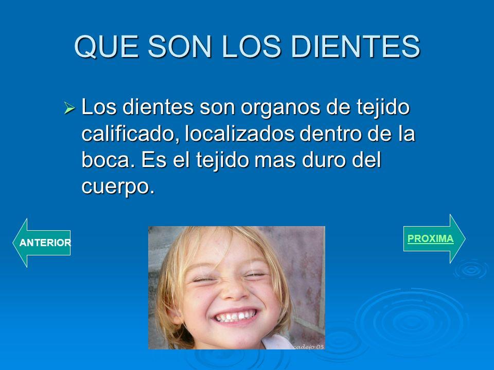 QUE SON LOS DIENTES Los dientes son organos de tejido calificado, localizados dentro de la boca. Es el tejido mas duro del cuerpo.